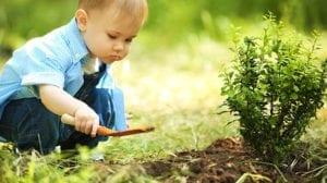 ילד, שתילה, צמיחה, שמות ויטג'